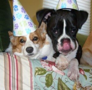 Happy Birthday Kc and Lucy!