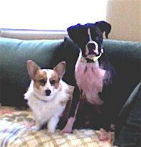 Reiki Dog Experts