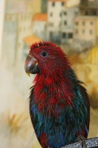 Savannah the Parrot's Reiki Session