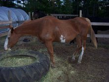 Before & After pics Horse w/ Cushings Reiki Talk Part II