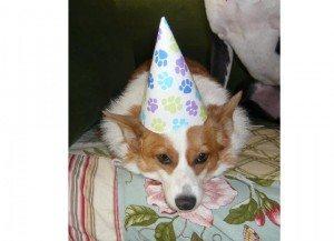 Happy Birthday Lucy!