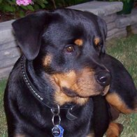 Energy Healing For Alexa the Rottie