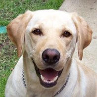 Jake's the Yellow Lab's Wellness Session