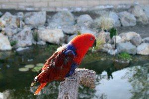 15th Reiki Session for Parrot