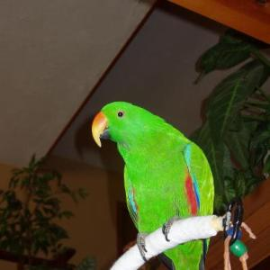 "Reiki Healing for Leo The Parrot For ""Fainting"" When Groomed"