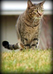 Reiki Attunement For Keegan The Cat