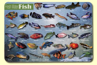 Attuning freshwater fish and salmon with coryelle kramer for Common freshwater aquarium fish