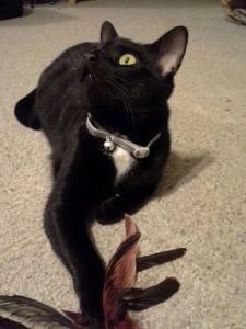 Reiki Attunement For Batty The Cat