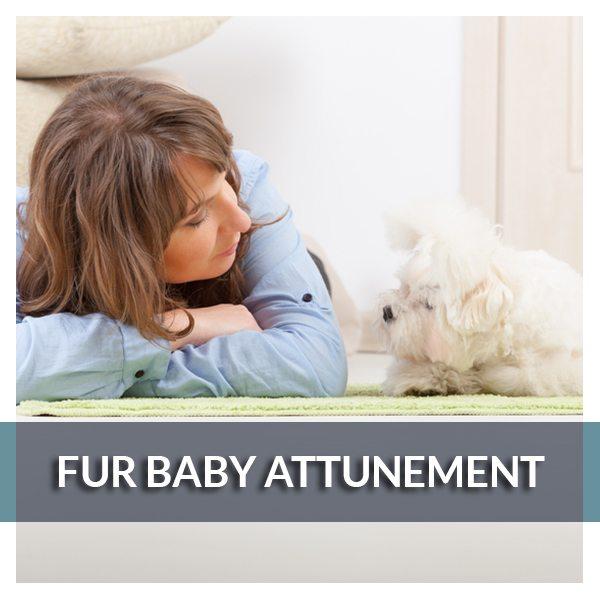 Fur Baby Attunement