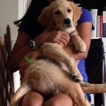 Reiki Attunement for Jesse the Golden