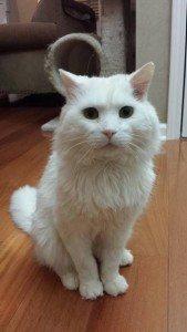 Jack(meisocat)