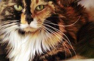 Reiki For Trixie the Cat