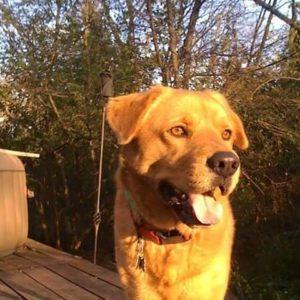 Reiki For Buddy Red Dog