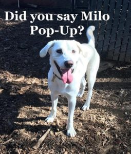 Candy's Adventure At The Milo Foundation