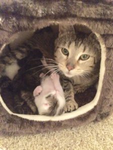 Reiki for Feral Mama and Kittens