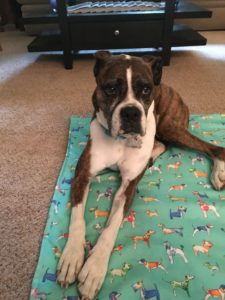 Reiki For Kona 8 yr old Boxer